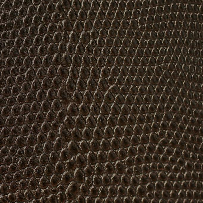 Lizard Cocoa