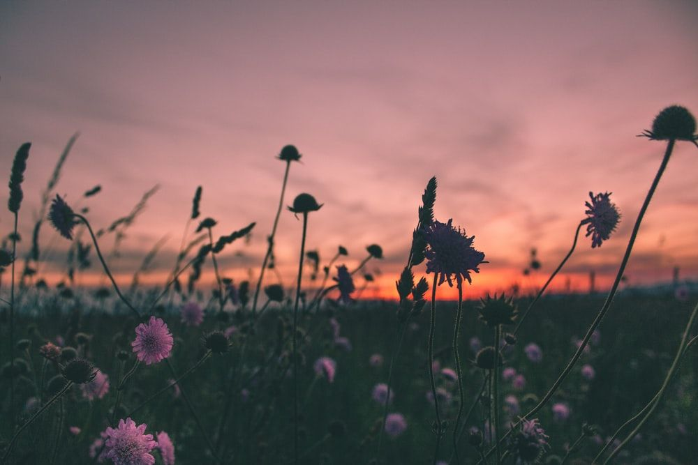 After business hours sunsetting in field of flowers
