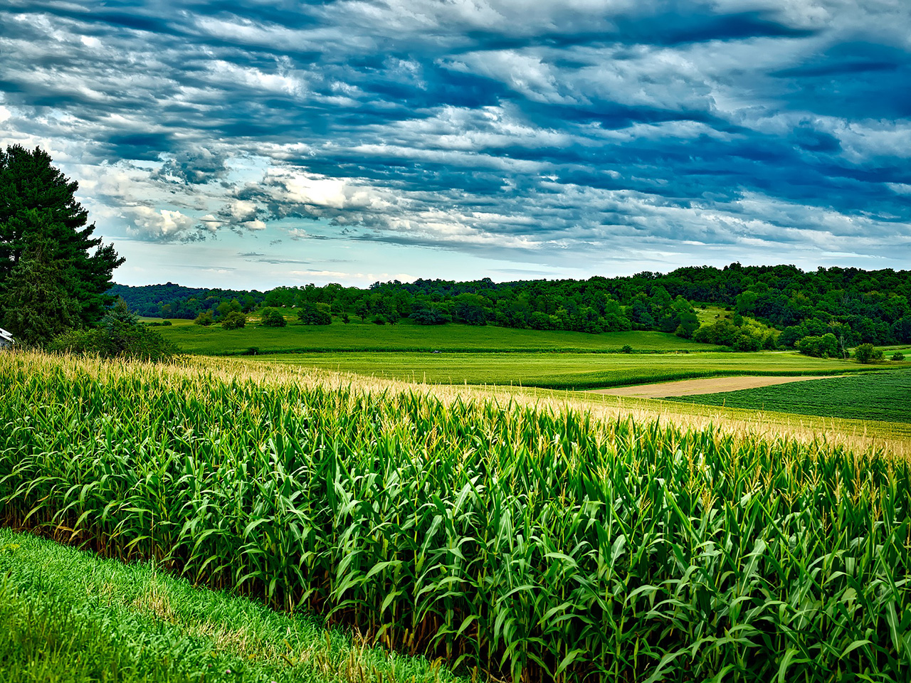 Image of a vast land of crops.