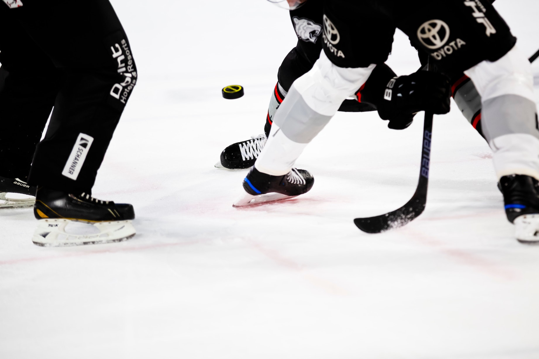 A referee drops a puck between two hockey players waiting to face off.