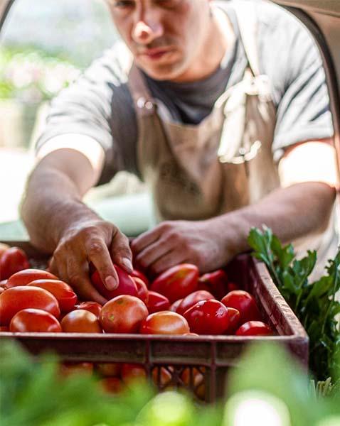 Tomates y verduras cosechadas localmente