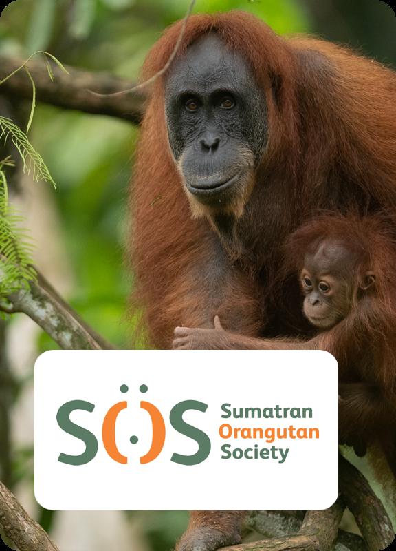Orangutan SOS