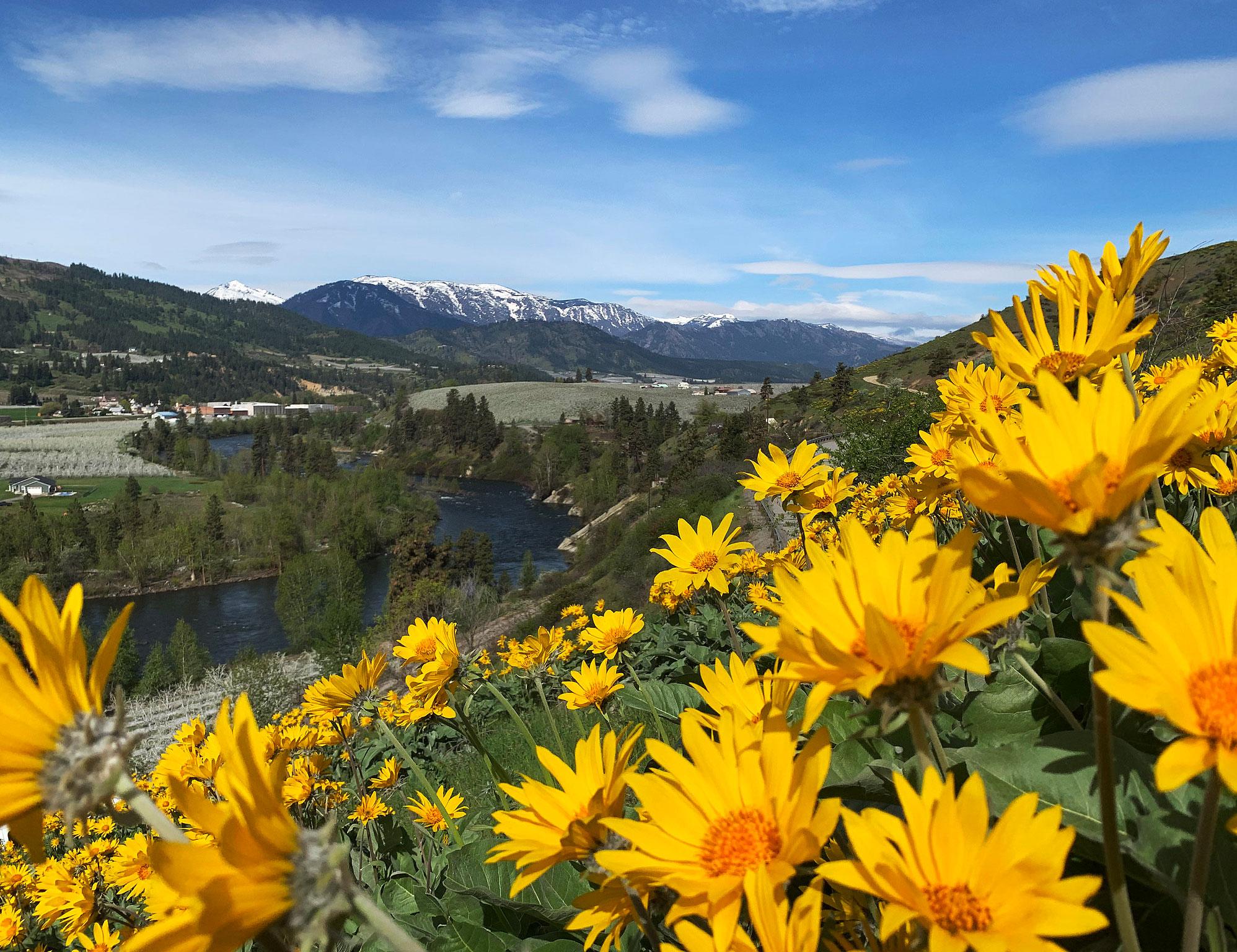 yellow flowers on hillside