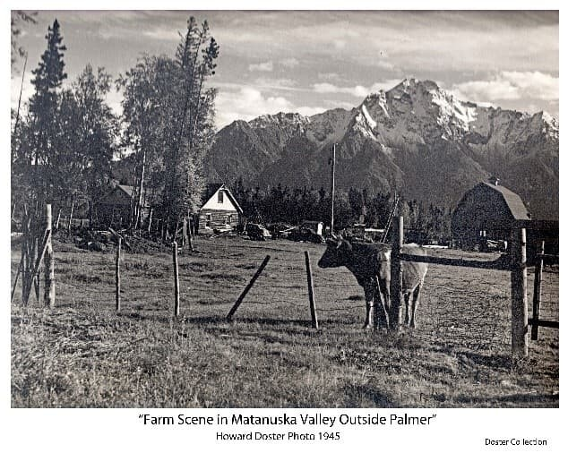 Image shows a Colony log house and typical Colony barn, a cow in foreground behind a barbed wire fence, two cars next to the house, trees and Pioneer Peak in background.