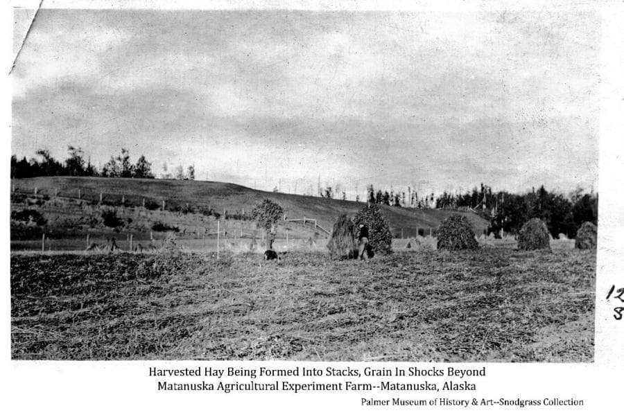 Image shows two men in a field of harvested hay in the foreground, lifting loose hay with pitchforks to place it over upright wooden stakes to form haystacks.  A harvested grain field is just beyond with grain shocks evident. Fences, pasture land and trees are in far middle ground.