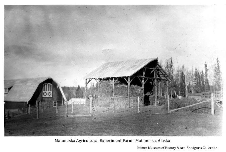 Image shows the back of the main barn at Matanuska Experiment Farm and a pole barn partly filled with hay, wire fencing on wood posts in foreground, trees in middle & background.
