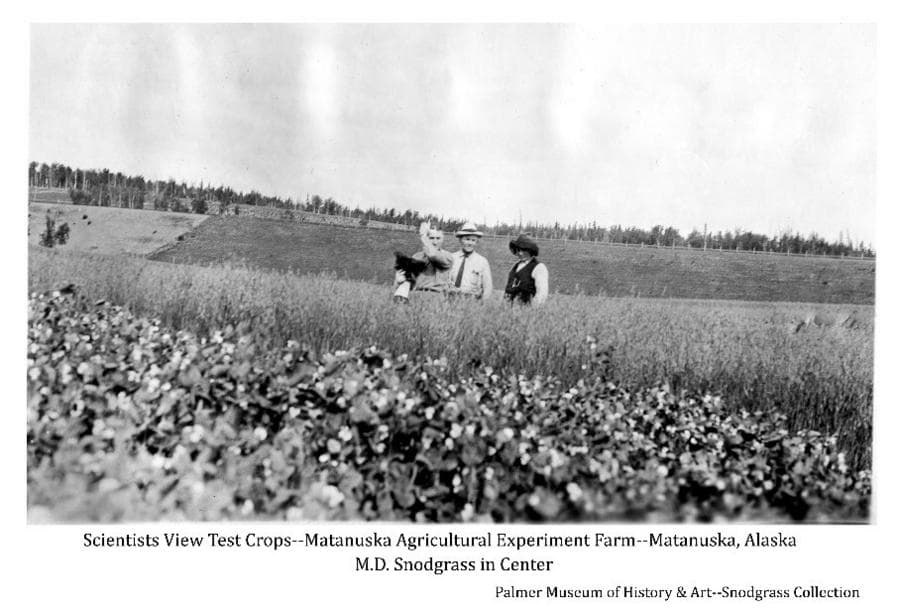 Image shows three men, center man identified as M.D. Snodgrass, standing in a field of grain with a different crop in the foreground, fields and forest are beyond.