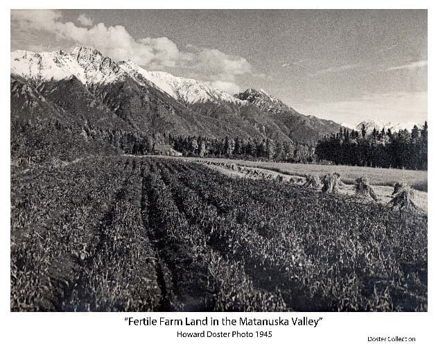 Image shows an early fall scene of a field of several rows of potatoes with grain field beside it. Some of the grain had been cut, bundled and shocked. Buildings are visible at the far end of the field with dense forest surrounding all. High mountains are in background with early snow on top and white clouds above.