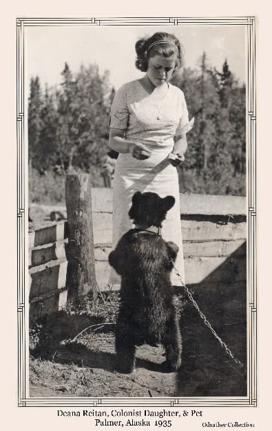 Image depicts a young girl in a white dress hand feeding a small black bear cub. Bear is tethered by a chain and collar. Girl is identified as Deana Reitan, daughter of Bernard & Alice Reitan, Matanuska Colonists from Wisconsin.