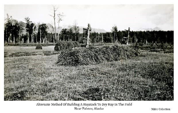 Image shows a harvested hay field with two forms of haystack construction. In foreground and middle ground are pole racks with hay on them, the front one partially covered. In back middle ground are smaller stacks on single stakes. The sides of the field are forested with Talkeetna Mountains in background.
