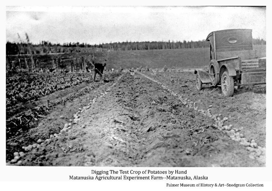 Image shows a partially harvested potato field with a man digging potatoes by hand using a long-handled fork. Two rows of dug potatoes and an old truck are evident in the foreground. A harvested hay field with several haystacks is in middle ground and a bluff and forest are in background.