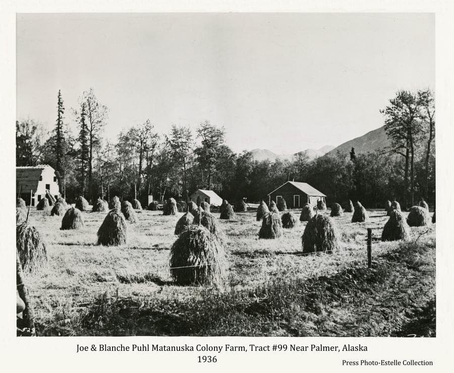 Image is a northeasterly view from Scott Road showing numerous hay stacks in foreground, a colony barn under construction, a tent, and a log house in middle ground.  Spruce and cottonwood trees form the forest behind the buildings, part of Lazy Mountain is visible beyond.