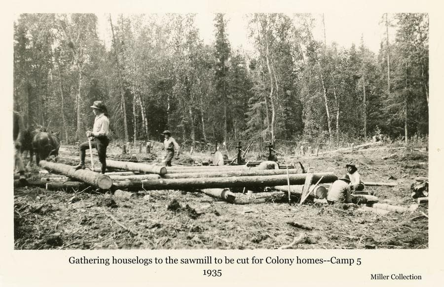 Image shows a group of men in a small clearing of a forest setting working around a portable sawmill.  A two-horse team is visible used to drag logs to the sawmill.