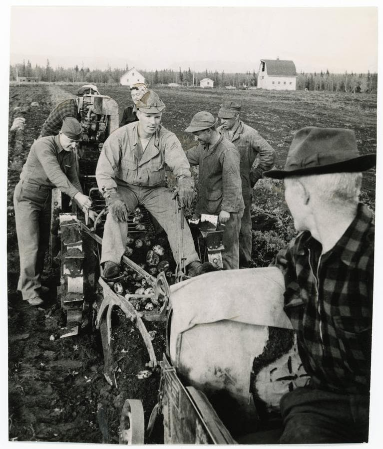 Image shows a crew of farmers, soldiers and women operating a potato digger machine on a Colony farm.  Farmstead buildings are in background, including a barn, house and outbuildings.  Heavy forest is in background.