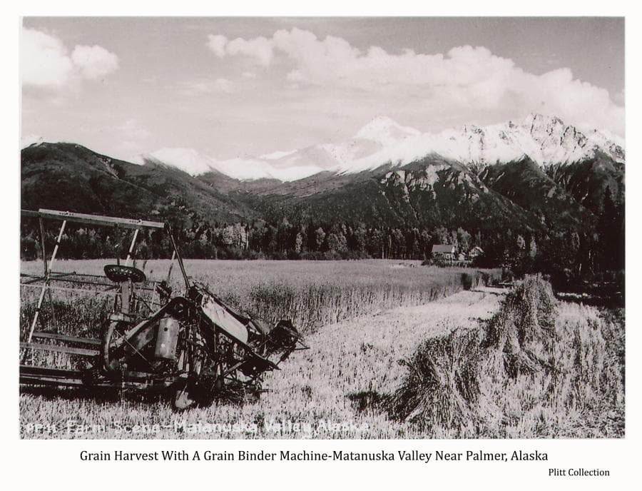 Image shows a partially cut grain field with a grain binder machine in foreground and several shocks of grain.  Buildings of a farmstead are visible in middle ground with forest and snow-capped mountains beyond.  Lazy Mountain and Beyer's Peak are evident.