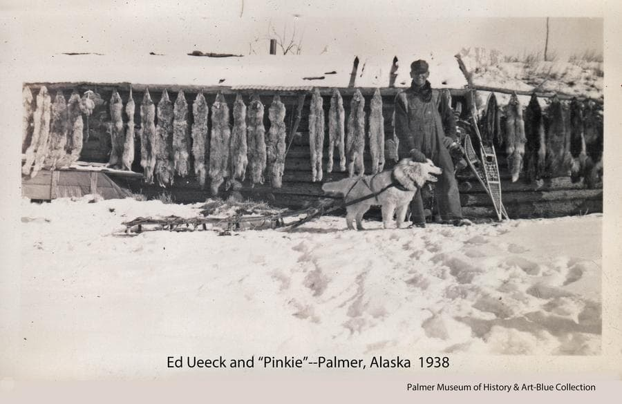 "Image shows trapper Ed Ueeck and his dog ""Pinky"" in front of a log cabin with furs hanging on display on the cabin wall.  Snow is on the ground and a pair of snowshoes are visible against the wall.  Furs include coyote, lynx, fox, wolverine, and martin."