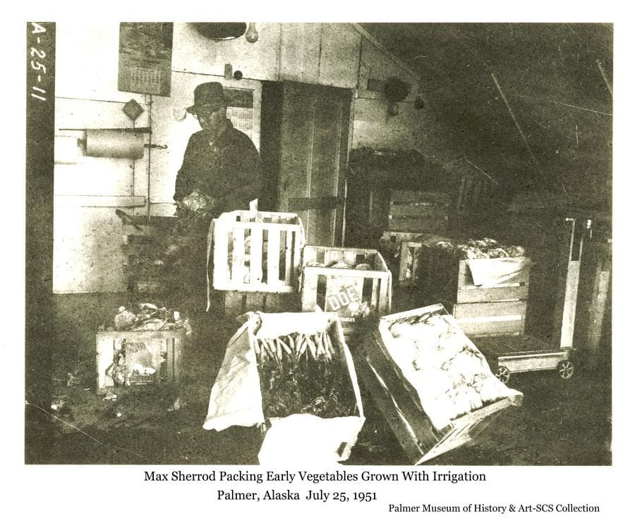 Image shows Palmer farmer Max Sherrod in his packing shed preparing and crating vegetables for shipment to market.  Vegetables shown include carrots, cauliflower, and lettuce.  This produce was grown with the aid of irrigation.