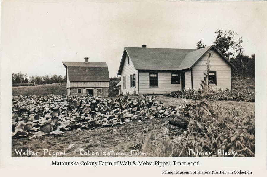 Image is a summer view of a colony house with a colony barn beyond.  A field of cabbage is in foreground.  The farmstead is identified as that of Colonists Walt and Melva Pippel on tract #106 near Palmer, Alaska.