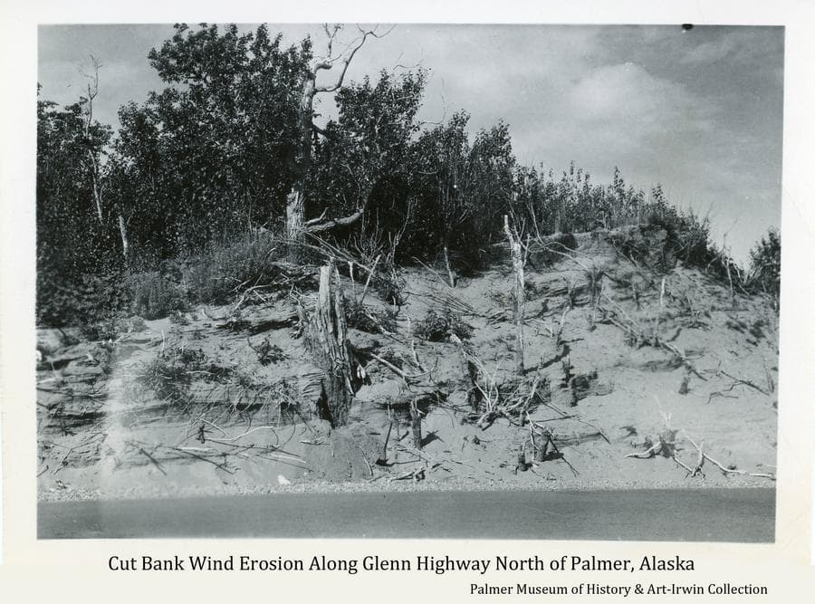 Image shows wind-deposited soil exposed in a cut bank along the Glenn Highway about 1-1/2 miles north of Palmer.  Once exposed by the road cut, the wind has eroded the soil, exposing tree trunks and roots that were buried when the fine soil was originally deposited by the Matanuska River wind years before.