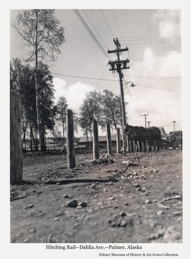 """Image is a summer view of horses standing at the hitching rail on the street in Palmer originally referred to a """"Market Street"""", later designated as Dahlia Ave.  The image shows the hitching rail was constructed from posts with a cable run through and between them.  The area served as parking for automobiles as well as horses across from the Co-op garage, post office and trading post.  Town buildings are visible beyond and power poles and lines are prominent."""