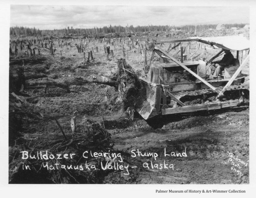 Image shows a man on a bulldozer pushing stumps and root wads from a field into windrows.  Colony farmstead buildings are visible in background. The photo illustrates the method to best clear the land with little removal of the soil.  The field beyond the dozer shows that trees have been previously cut and removed, leaving high stumps.  By pushing on these high stumps, the dozer can push them over, tipping up just the root ball which can be removed as shown without removing much of the surrounding soil.