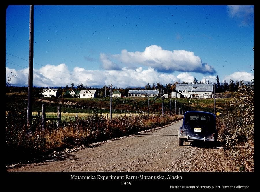 Image is a fall color view of the Matanuska Experiment Farm buildings taken from Trunk Road south of the farm.  The gravel road is prominent in foreground with a car parked on the shoulder.  A field of ripe grain is to the left and the farm buildings are in middle ground, center.  A power pole is visible to the right of the road and telephone poles and wires are evident on the road's left side.  Fluffy white clouds are in blue sky overhead.