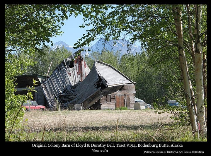 Image is a summer view of a Colony Barn, identified as located on Tract #194 near Bodenburg Butte, having originally belonged to Colonists Lloyd and Dorothy Bell.  The barn is in final stages of collapse.  A portion of an attached concrete block building is evident at left and Chugach Mountains are in background. This farm, located at the corner of Bodenburg Loop Road and Doc. McKinley Ave., was later owned by dentist Lee McKinley prior to the later demise of the barn.  This photo is number three in a series of three documenting the collapse of this barn.