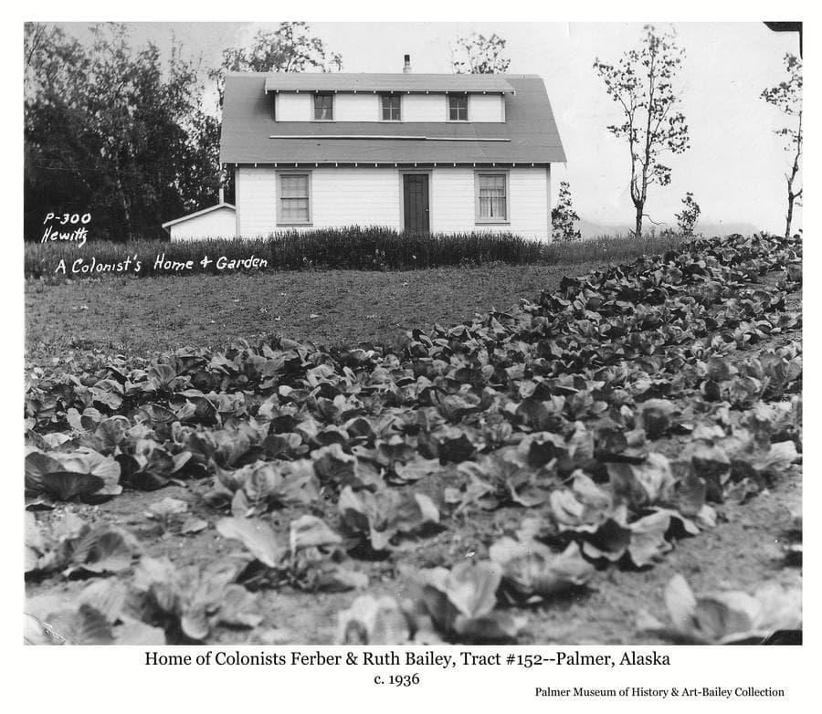 Image shows several rows of cabbages in foreground with a two-story white house on the hill at middle ground, identified as the home of Colonists Ferber & Ruth Bailey, located on Tract # 152.  Part of the pump house building is visible behind the house with trees beyond.