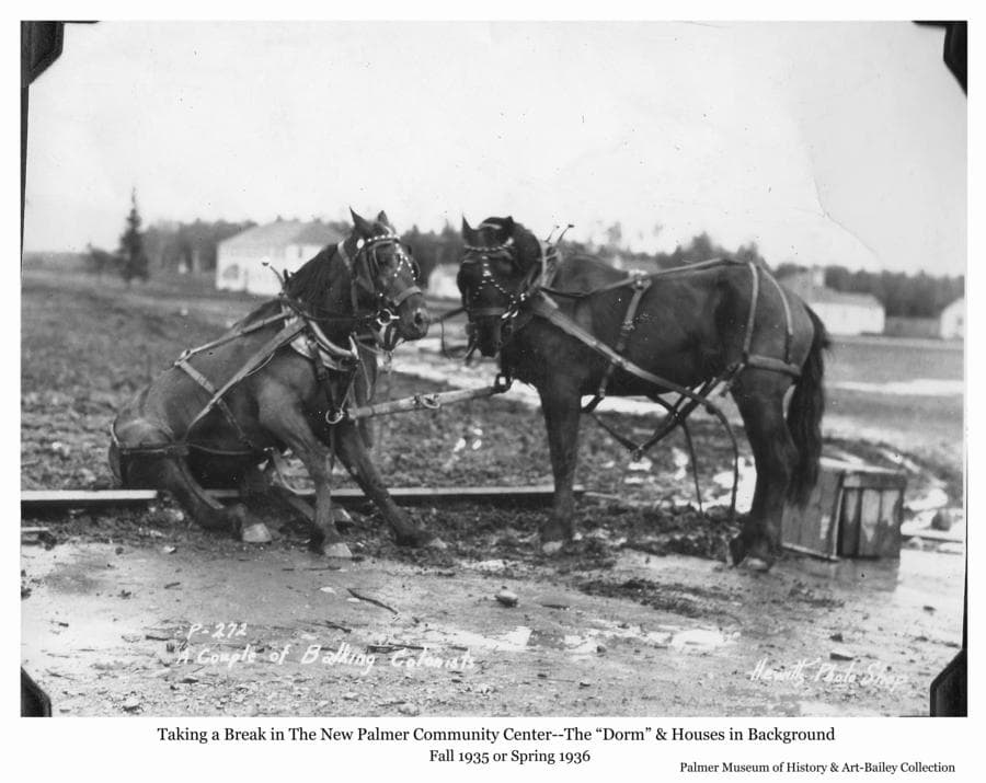 "Image is a fall or spring view of two harnessed horses in the Palmer Community Center taking a break from their labors.  Colony buildings, including the ""Dorm"" and staff houses are visible in background."