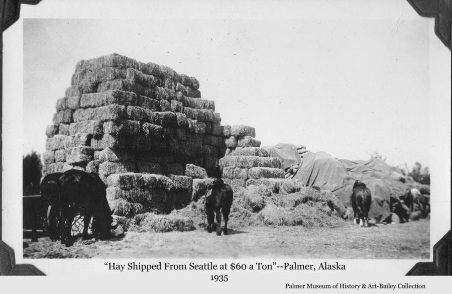 "Image is of a tall stack of hay bales with four horses feeding at the edge.  Behind the hay is a stack of filled bags, mostly covered with tarps.  A grain drill is partially visible at left.  A caption accompanying the photo is ""Hay Shipped From Seattle at $60 a Ton"".  That cost would be equivalent to approximately $1,140 per ton in 2020 dollars."