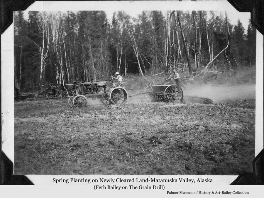 Image is a summer view of two men planting a grain crop.  One man is driving an early model Farmall tractor pulling a grain drill and cultipacker on a newly cleared field.  Another man, identified as Ferber Bailey, is riding on the grain drill.  A windrow of burned stumps is at the field edge with birch and spruce forest behind.
