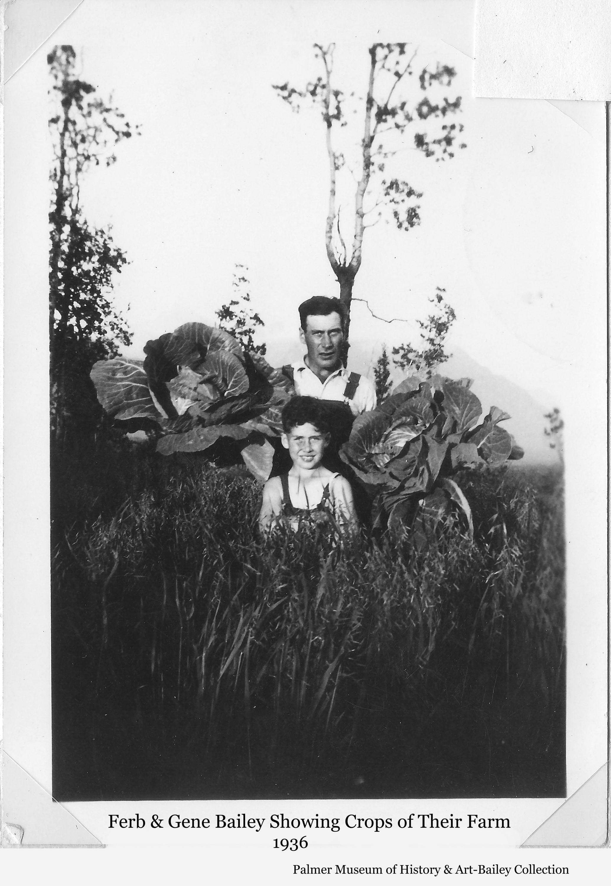 Image is of Colonist Ferber Bailey and son Gene in a grain field showing off cabbages grown on the Bailey farm on Tract #152 near Palmer.  Chugach Mountains are faintly visible in background.