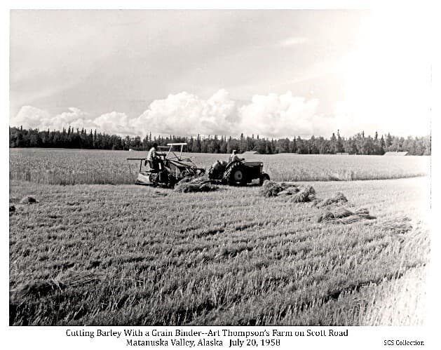 Image shows a tractor pulling a grain binder in a grain field, cutting and bundling the grain, identified as barley. The foreground exhibits stubble where the grain had been cut, with numerous harvested bundles on the ground. One man is on the tractor, another on the binder at the edge of the uncut grain beyond. Roof tops of several buildings are visible beyond the grain field. Heavy forest is in background with clouds above. Location is identified as Art Thompson's farm on Scott Road just north of Palmer.
