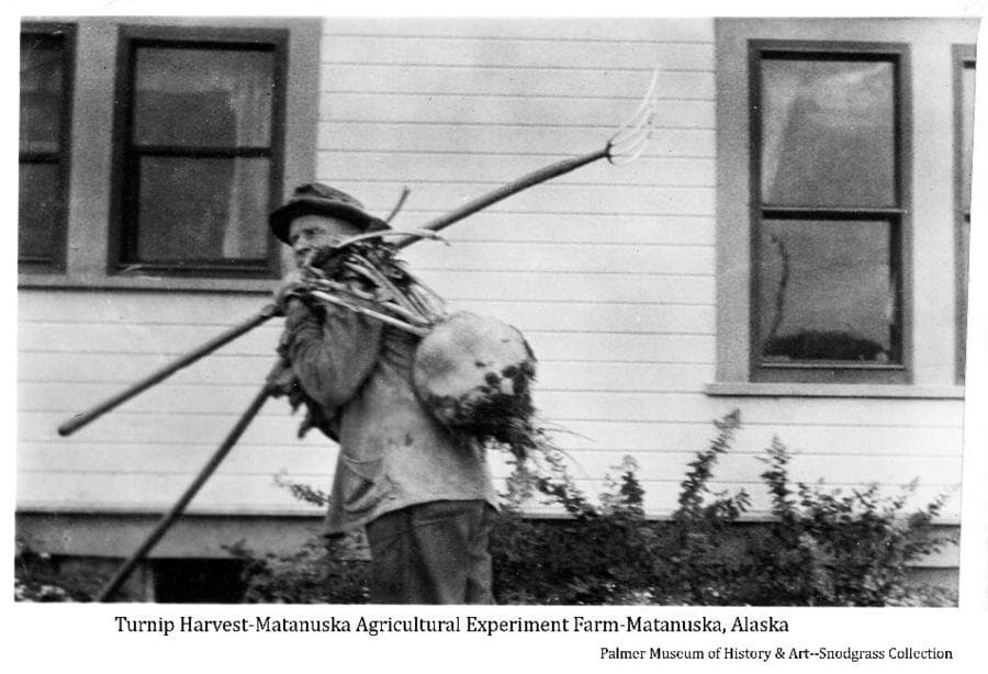 Image shows a man carrying a pitchfork and a large turnip in front of a building at the experiment farm.