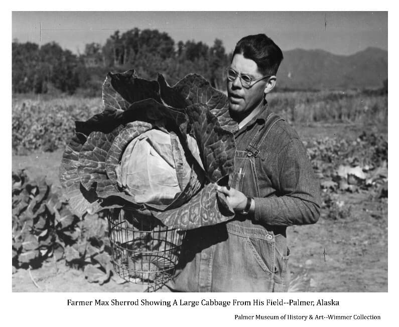 Image shows a man, identified as Max Sherrod, holding a wire basket and a large cabbage. The man is standing in a field of vegetables with trees and mountains in background.