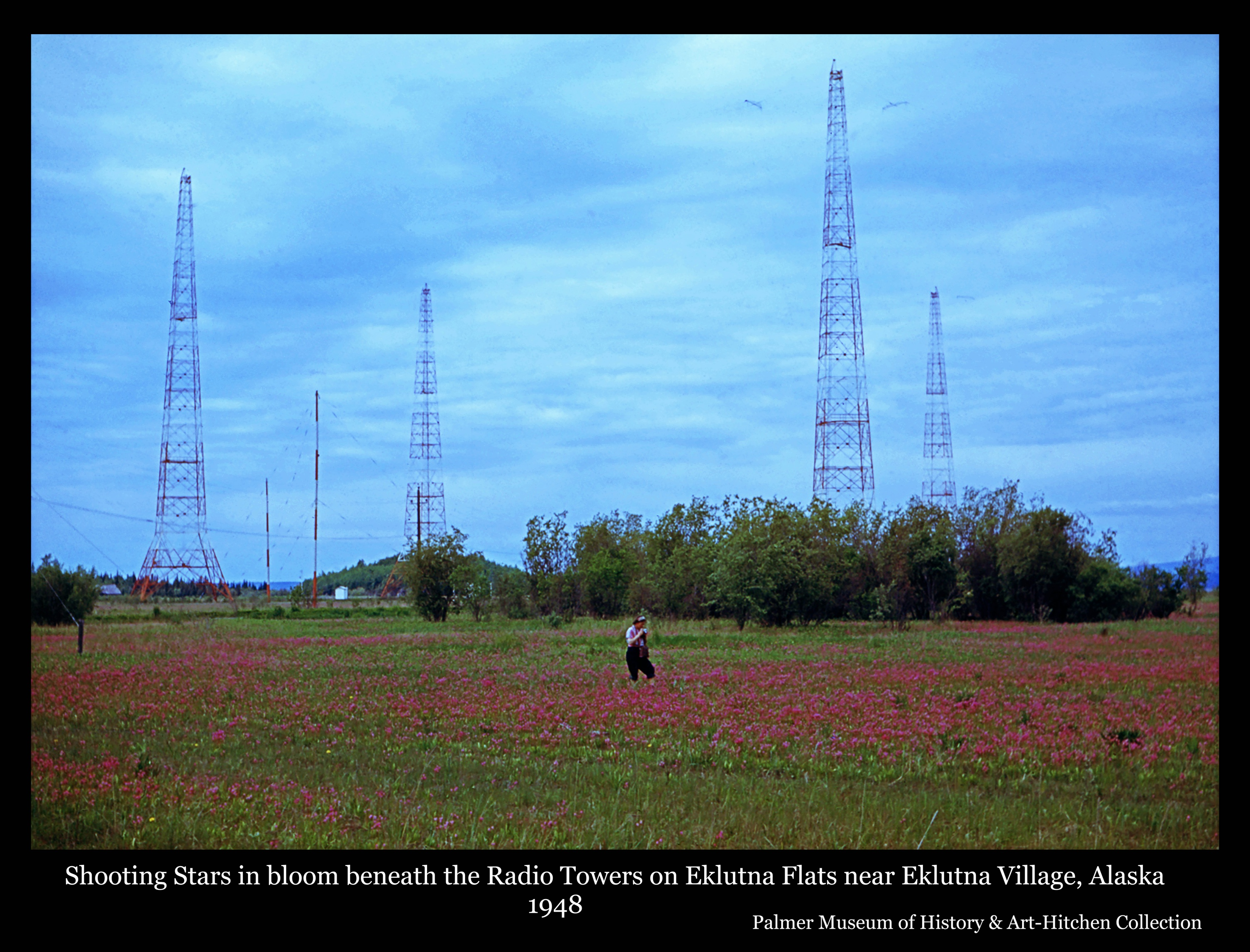 Photo is a color image of a woman standing on the Eklutna Flats among blooming Shooting Star flowers with large metal radio towers rising behind.  A small white building is visible in background next to a small hill.  Another building is partially visible at left.  This was a typical scene in May on the Flats during the 1940's and 50's, on both sides of the road, as the shooting stars and blue iris bloomed.  As willow brush became more prevalent the flowers have continued to be crowded out.