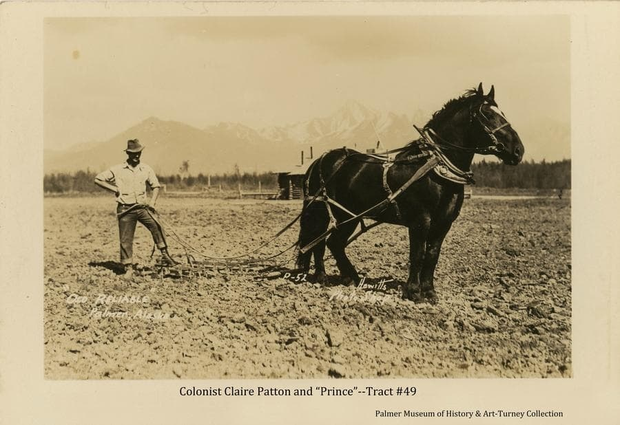 """Image is of a farmer, identified as Colonist Claire Patton, and a horse, identified as """"Prince"""", standing in a field of tilled ground, pausing in the process of harrowing.  Part of a log building is visible behind the horse.  A fringe of forest is in far middle ground and mountains are visible in background.  Location is assumed to be on Patton's Colony tract #49 south of Palmer.  The horse, """"Prince"""", was the youngest stud horse brought to the Colony, and was well known as highly intelligent and capable in any kind of work."""