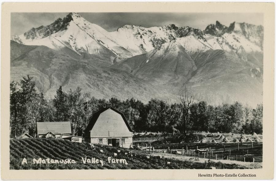 Image shows a Colony farmstead on tract#169 located on the Fishhook Road north of Palmer.  In foreground is a potato field with several people harvesting.  A Colony barn, house and other outbuildings are evident.  A field of haystacks is to the right with heavy woods behind.  Snow-clad mountains form the background.