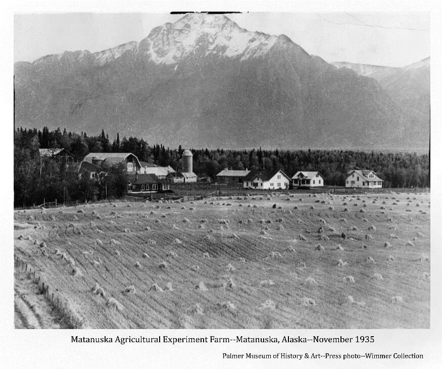 Image shows the Matanuska Experiment Farm buildings in middle ground, a field of harvested & shocked grain in foreground, forest behind the buildings and snow-topped Pioneer Peak prominent in background.