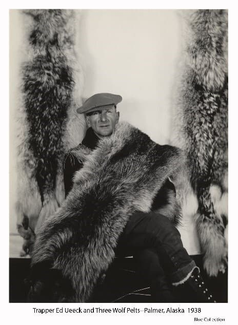 Image is of trapper Ed Ueeck of Palmer, Alaska sitting between two hanging wolf pelts and with a third wolf pelt draped over his shoulder and across his lap. Ueeck is wearing a soft flat cap and high-top laced boots.