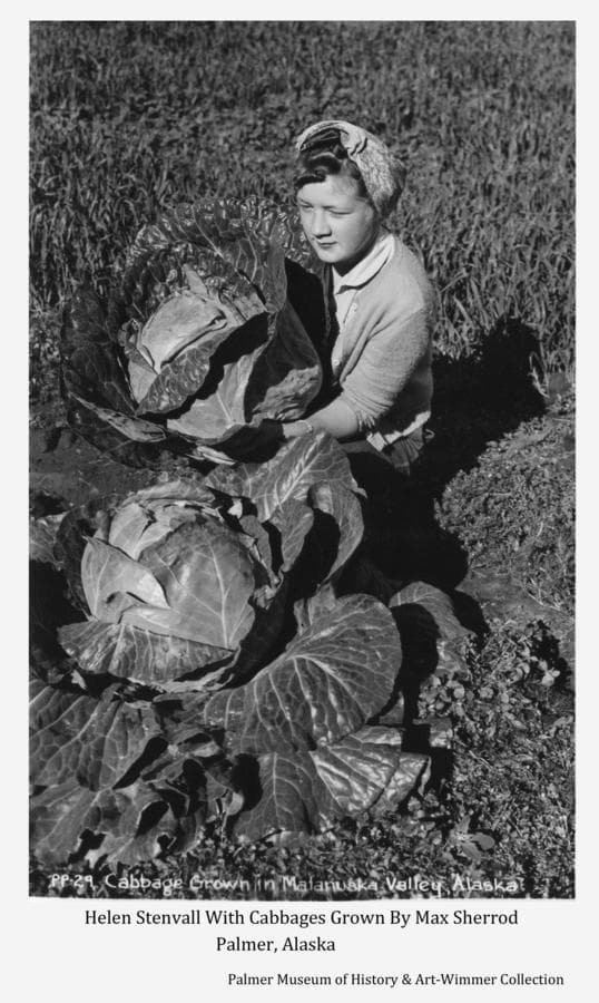 Image shows a woman, identified as Helen Stenvall, posing with two large cabbages grown by Max Sherrod of Palmer.