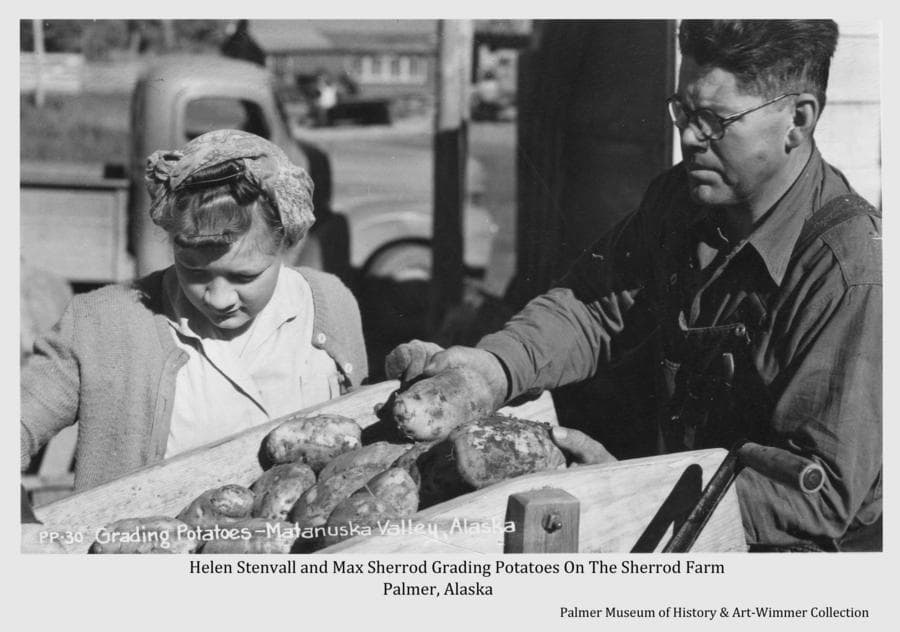 Image shows farmer Max Sherrod, with helper Helen Stenvall, sorting potatoes in preparation to send them to market.  A pickup truck is visible behind them.