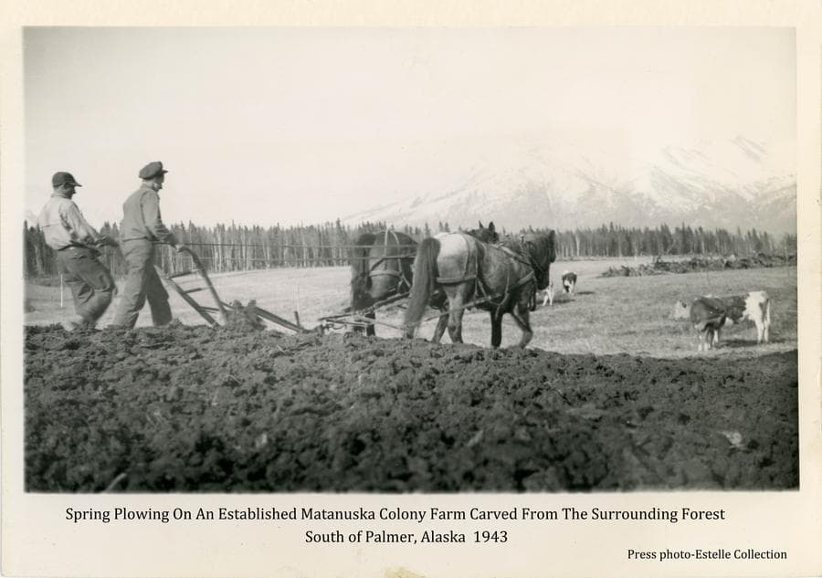 Image shows two men (one perhaps a soldier) in foreground plowing a field with a single bottom hand plow pulled behind a team of two horses.  Several cows are evident on unplowed fields in middle ground.  A stump row of trees cleared from the fields is apparent in far middle ground.  Heavy forest borders the fields in background with snow-clad mountains beyond.