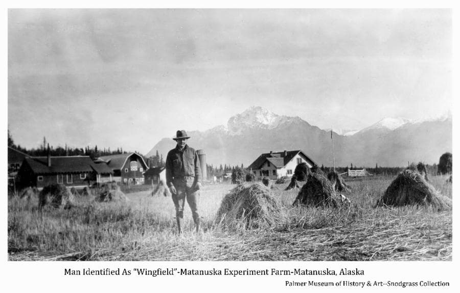 """Image shows a man, identified as """"Wingfield"""", standing in a field of harvested grain in shocks in the foreground, buildings of the Matanuska Experiment Farm are behind in middle ground, Pioneer Peak in background."""