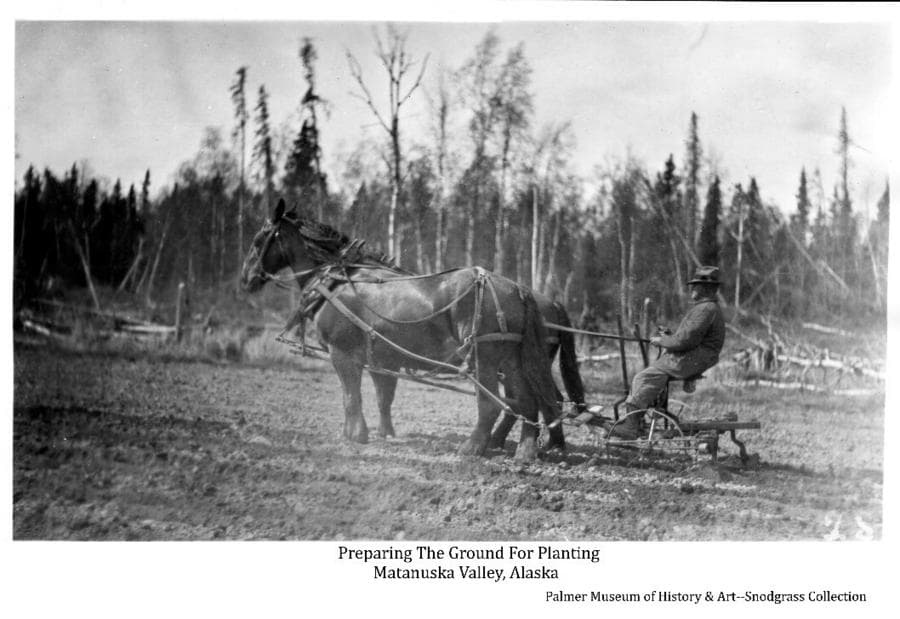 Image shows a man riding a tilling machine drawn by a team of two brown horses in a field of prepared ground in the foreground. A forest of mixed birch & spruce trees is in middleground.