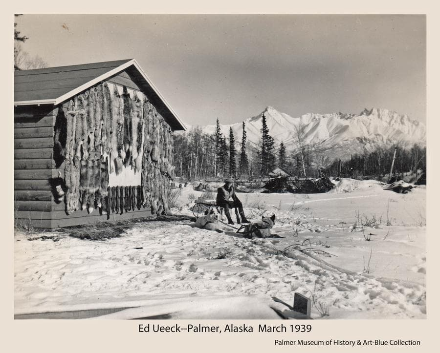 Image is a winter scene of trapper Ed Ueeck and his two sled dogs in front of a building with furs hanging on display.  Trees are in middle ground and snow-clad mountains in background.  Displayed furs represent the trapper's winter catch, and include wolf, lynx, coyote, wolverine, fox and martin.