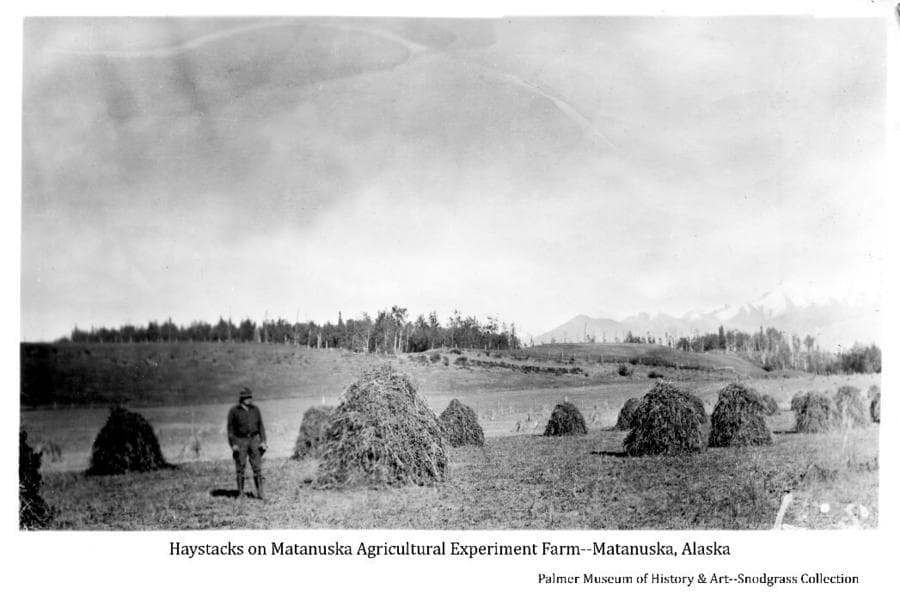 Image shows a man standing in a field of harvested hay formed in haystacks in stakes in the foreground, trees in middle ground and mountains in background.