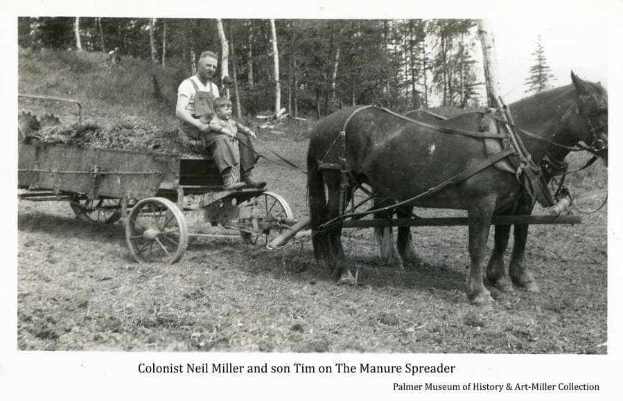 Colonist Neil Miller and young son Tim are sitting on the manure spreader drawn by a two-horse team.  The spreader is loaded and the contents are ready to be spread on a field.  Birch and spruce trees form the backdrop.
