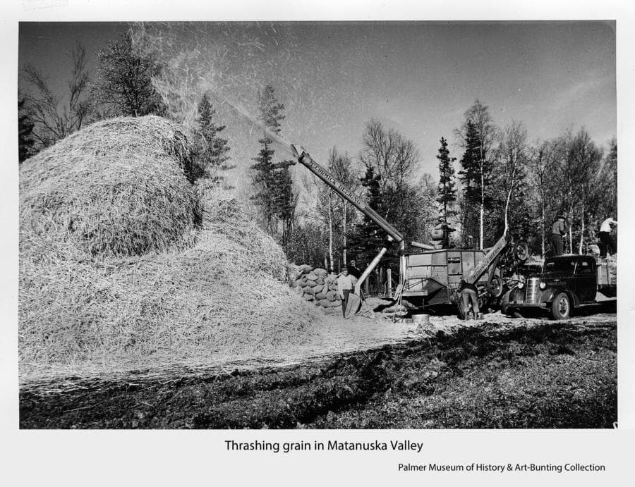 Image shows several men threshing grain.  Two men at right unload a truck into the threshing machine.  One man in center tends the sack receiving the grain while the machine boom above blows the straw onto a large pile at left.  A mixed forest forms the backdrop.