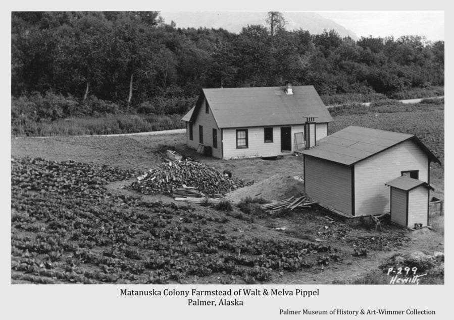 Image is of Colonists Walt and Melva Pippel's frame house and two outbuildings.   Row crops are in foreground and beyond the buildings.  A wood pile is apparent.  A road is visible beyond the house, this being the Fishhook Road leading at left to Hatcher Pass and the gold mines.  Beyond the road is a heavily forested ridge formed of wind-blown soil from the Matanuska River unseen just beyond.  The Glenn Highway was later located on this ridge.